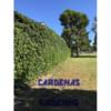 Yard Maintenance by Cardenas Gardening